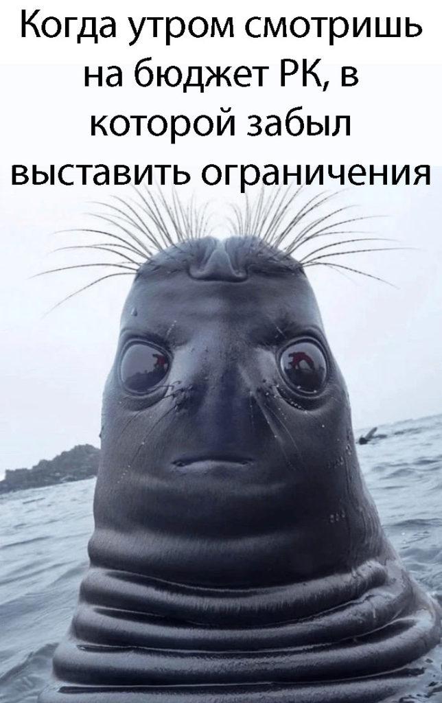 Мем маркетинг-тюлень